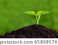 Young plant growing from soil, closeup. Ecology and plant care 65808576