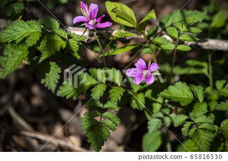 한국의 들꽃 65816530