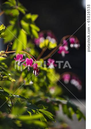 한국의 들꽃 65816538