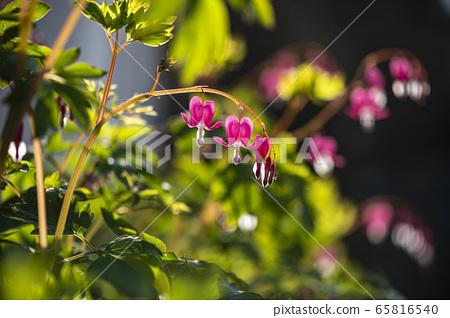 한국의 들꽃 65816540