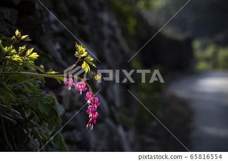 한국의 들꽃 65816554