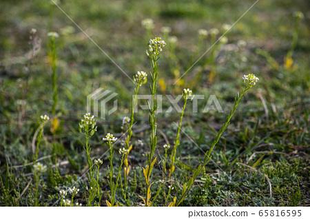 한국의 들꽃 65816595