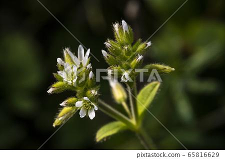 한국의 들꽃 65816629