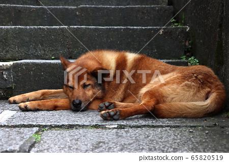 懶洋洋的大黃狗 65820519