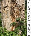 Aged bark and fresh green 65828365