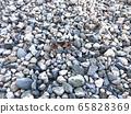 River crab 65828369