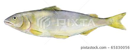 Watercolor illustration freshwater fish river fish fish ayu 65830056