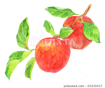Watercolor apple with branch 65830437
