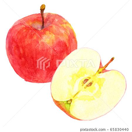 水彩apple_one和一半 65830440