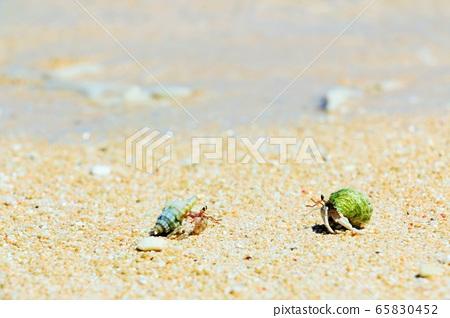 沖繩縣Hateruma島海灘上的寄居蟹 65830452