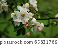 Blossoming apple tree with white flowers during spring sunny day on blurred background 65831769