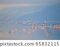 Flock of pink flamingos from Lake Manyara, 65832115