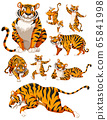 Set of tiger character 65841998