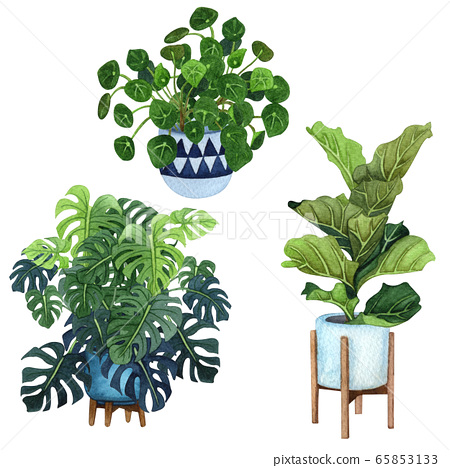 Indoor plants in a pot set . Watercolor plants set. Home plants potted. Hand drawn illustration. ZZ Plant (Zamioculcas),  Snake Plant (Sansevieria), Chinese money plants or  missionary plant. 65853133