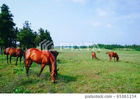 한가로운 목초지  65861154