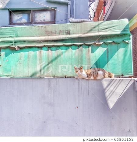 담벽락위 고양이 65861155