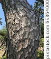 Pine tree skin 65864000