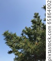 Pine flowers and blue sky in spring 65864002