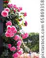 Rose, pink rose 65869358