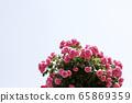 粉紅玫瑰,玫瑰 65869359