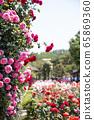 玫瑰,玫瑰公園 65869360