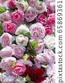 玫瑰花 65869361