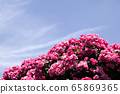 天空,玫瑰 65869365