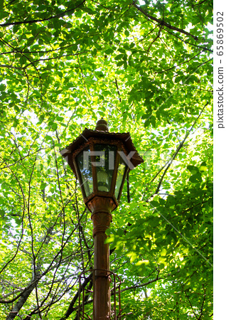 Fresh green, street light 65869502