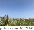 Spring walking path 65870141