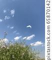 Spring walking path 65870142