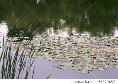 池塘濕地生態公園 65879857