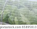 Insect repellent farm 65895813