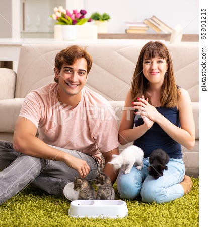 Young family with kitten playing at home 65901215