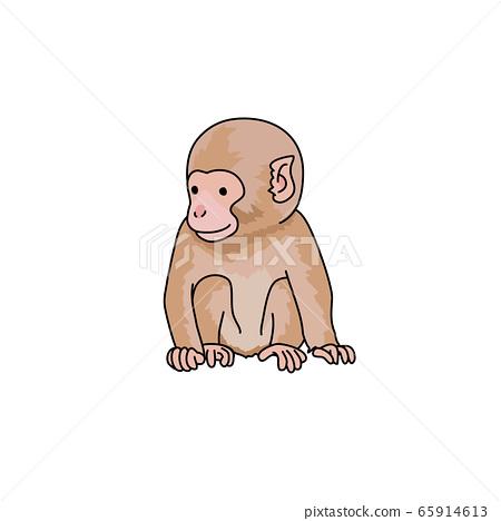日本獼猴 65914613