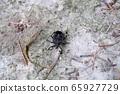 馬達拉蟲 65927729