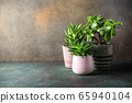 Collection of various succulent plants 65940104