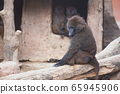 Monkey sitting and relaxing 65945906