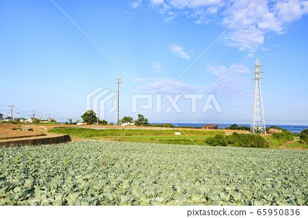 밭 (초여름) 65950836
