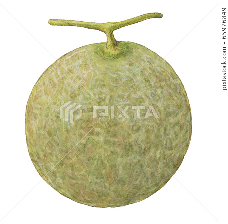 Melon Hand Drawn Watercolor Stock Illustration 65976849 Pixta Cantaloupes are packed with vitamins a and c, and since they have high water content, they are one cup of cantaloupe contains only about 55 calories (due to its high water content) but offers over. pixta