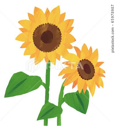 向日葵向日葵插圖素材水彩 65978987