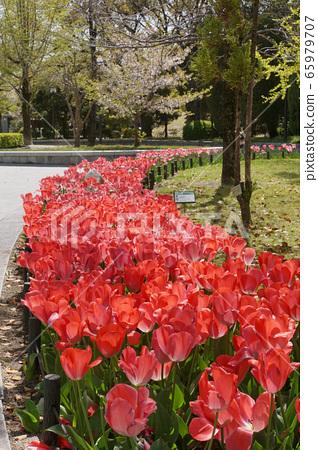 春天的和平公園 65979707