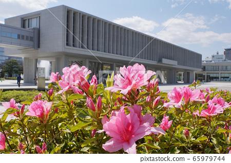 廣島和平紀念資料館和杜鵑花 65979744