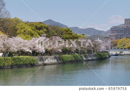 和平公園和櫻花 65979758