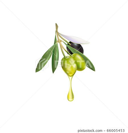 Realistic olive branch 3d illustration for 66005453