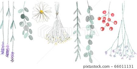 乾花的插圖集 66011131