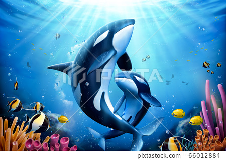 Killer whales family with coral 66012884