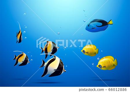 Three tropical fish 66012886