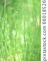 绿色自然背景模糊植物草摘要 66018526