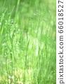 绿色自然背景模糊植物草摘要 66018527