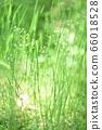 绿色自然背景模糊植物草摘要 66018528